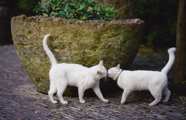 猫のバレンタインデー!【猫ラブラブ画像】 (15)
