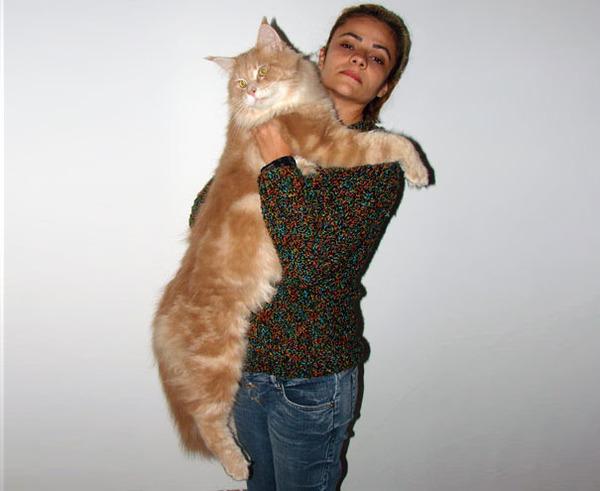 とても大きい猫の画像 20