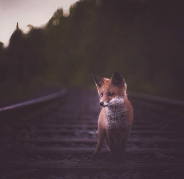 キツネやリスと戯れようぜ!フィンランドの胸キュン野生動物 (4)