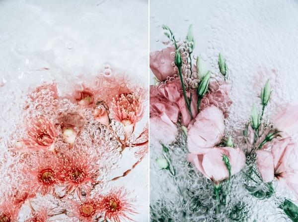 溺れる花の美しさ。花と水と泡の写真シリーズ『flotsam』 (1)