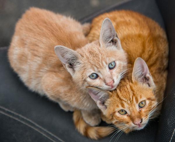 猫のバレンタインデー!【猫ラブラブ画像】 (37)