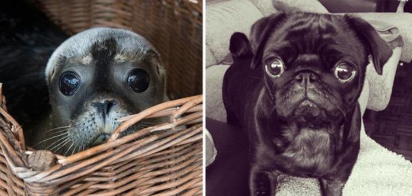 アザラシって犬そっくりじゃね?犬とアザラシを比較画像! (32)