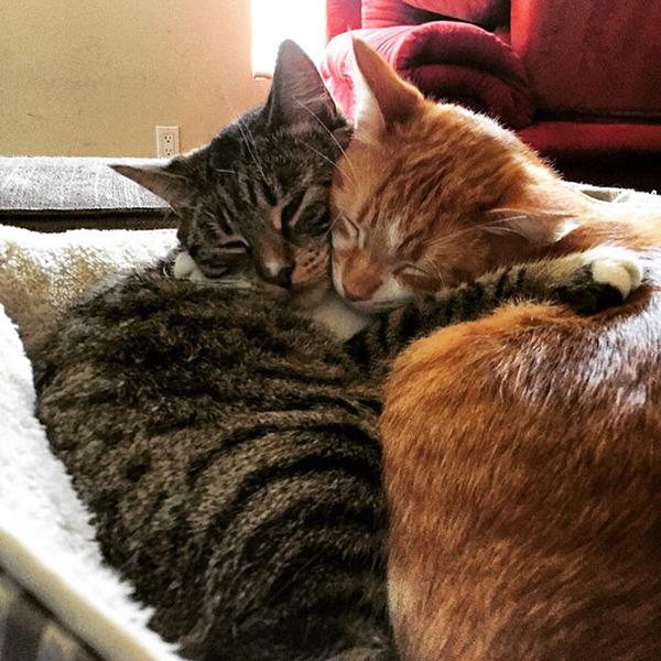 猫のバレンタインデー!【猫ラブラブ画像】 (30)