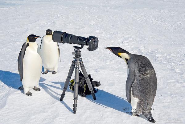 カメラに興味津々な動物の画像 (10)