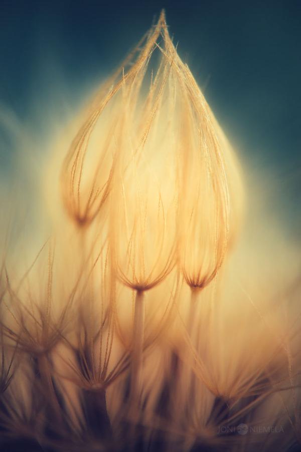 新しい命!植物の種子を撮影したマクロ写真 (5)