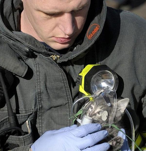 #18 火事の家から子猫を救出、酸素をあげる