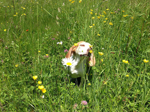 くんくん良い香り。花の匂いを嗅ぐ動物たちの画像 (42)