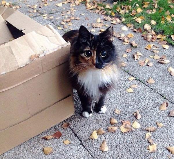盲目の迷い猫。珍しい毛色のキメラネコが愛を知る (3)