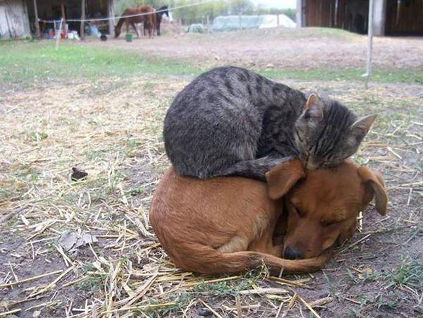 寝てるだけなのに…かわいすぎる猫たちの画像 (3)