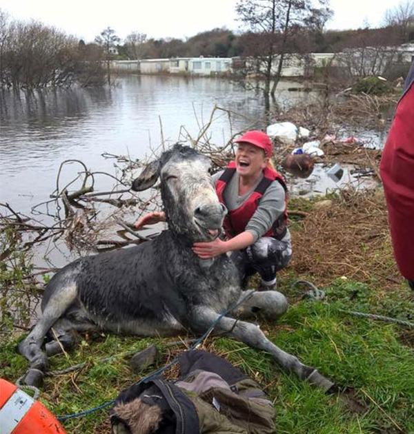 テヘペロ♪溺れかけていたロバを助けたら満面の笑顔をくれた! (4)