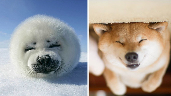 アザラシって犬そっくりじゃね?犬とアザラシを比較画像! (36)