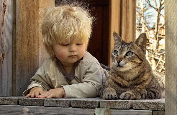 ペットは大切な家族!犬や猫と人間の子供の画像 (25)