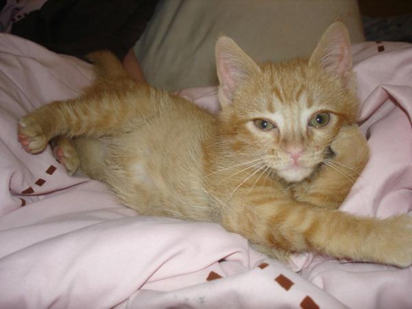 モデルのようにポーズを取る可愛い動物特集 猫 4