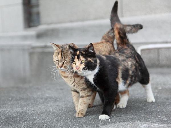 猫のバレンタインデー!【猫ラブラブ画像】 (52)