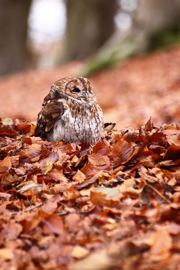 紅葉や秋の森の中を楽しむ動物たちの画像 (25)