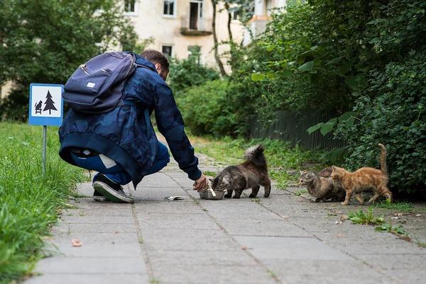 「猫の休憩所」 / ストリートで暮らす野良猫たち