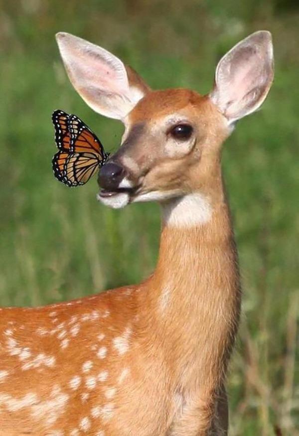 蝶とバンビ