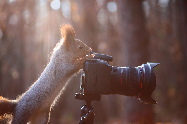 カメラのシャッターを押して撮影してるリス?
