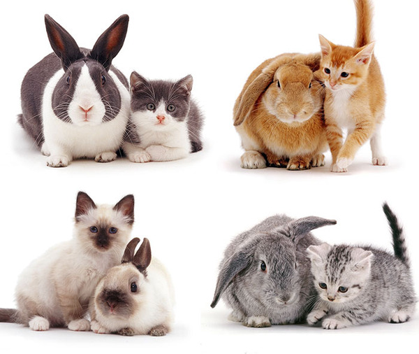 似てる!親が違うのにそっくりな動物画像30枚 (31)