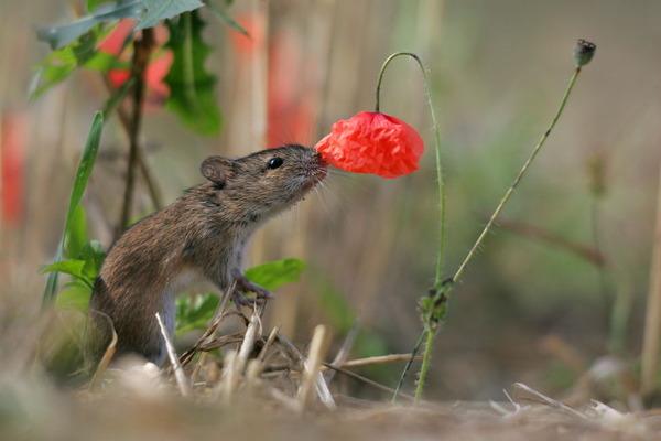 くんくん良い香り。花の匂いを嗅ぐ動物たちの画像 (11)