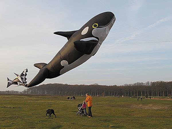 空の水族館!超大きいシロナガスクジラの凧がビーチに浮かぶ (3)