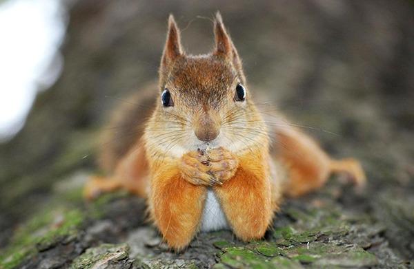 モデルのようにポーズを取る可愛い動物特集 リス