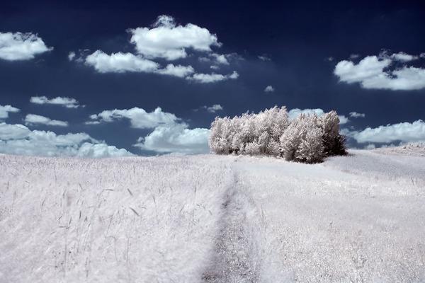 IR(赤外線)カメラで撮影されたポーランドの自然写真が美しい (6)