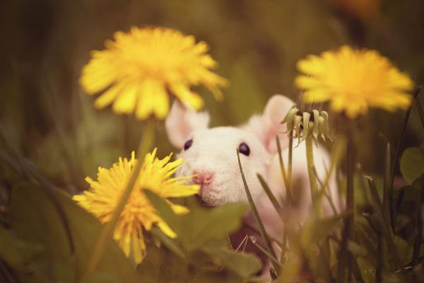 くんくん良い香り。花の匂いを嗅ぐ動物たちの画像 (10)