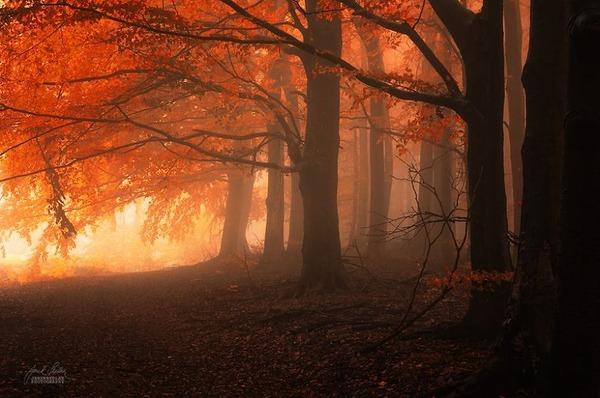 秋といえば紅葉や落葉の季節!美しすぎる秋の森の画像20枚 (10)