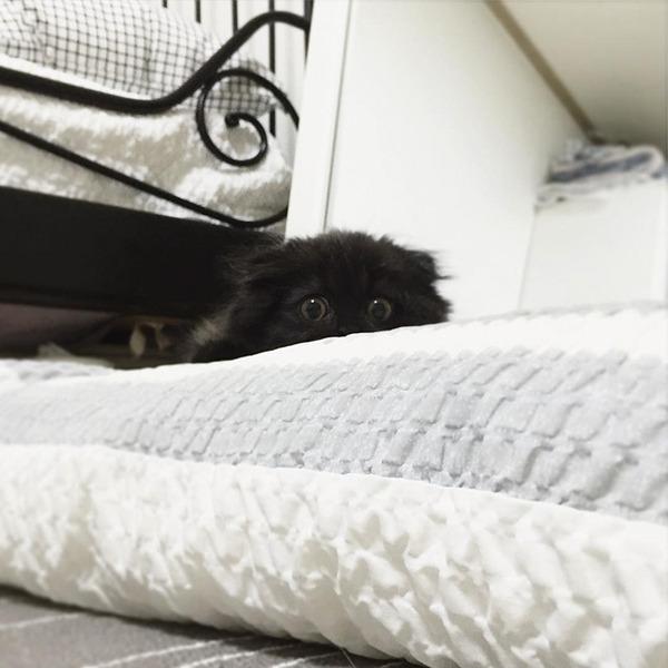 「まっくろくろすけ」みたいな黒猫画像!黒いモフモフ (12)