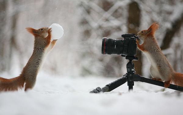 可愛いリスを撮影