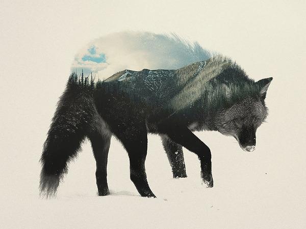 オオカミの二重露光写真byアンドレアス・リー 2
