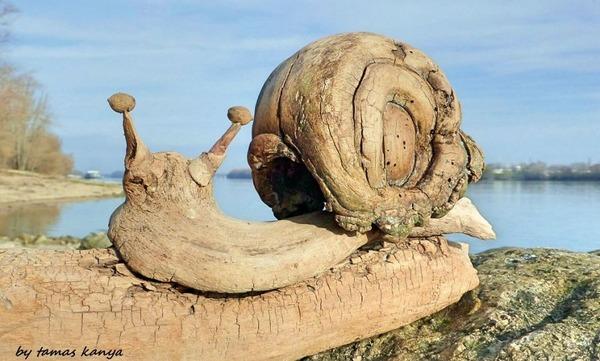 歪な形がゾンビっぽい!ドナウ川の流木で作られた彫刻作品 (1)