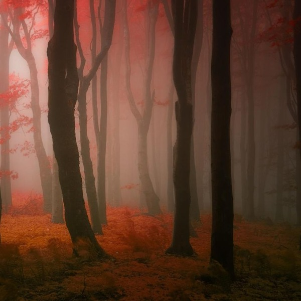 秋といえば紅葉や落葉の季節!美しすぎる秋の森の画像20枚 (16)