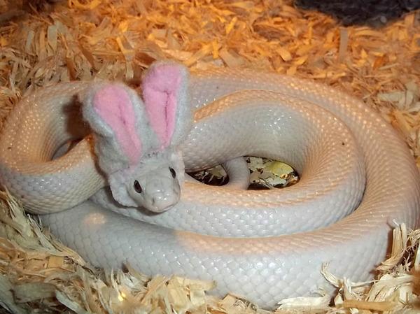 なんだこれカワイイぞ!帽子を被ったヘビ画像特集 (10)
