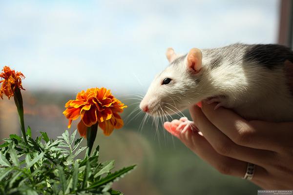 くんくん良い香り。花の匂いを嗅ぐ動物たちの画像 (30)