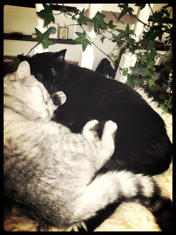 猫のバレンタインデー!【猫ラブラブ画像】 (43)