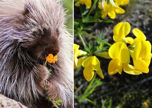 くんくん良い香り。花の匂いを嗅ぐ動物たちの画像 (49)