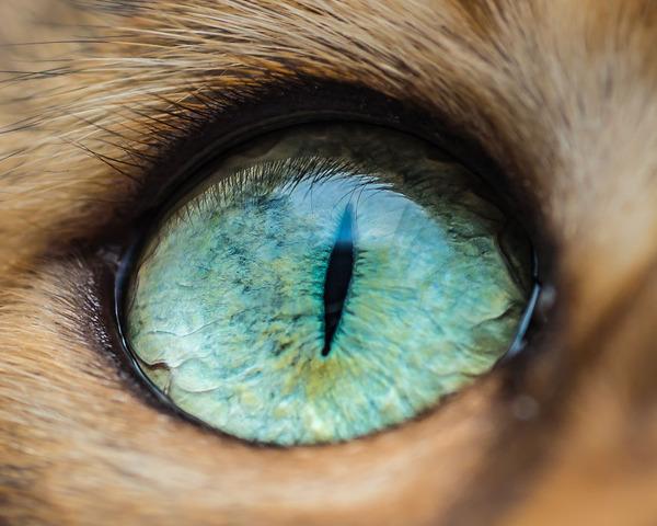 まさにキャッツアイ!綺麗な猫の瞳を撮影した画像16枚 (14)
