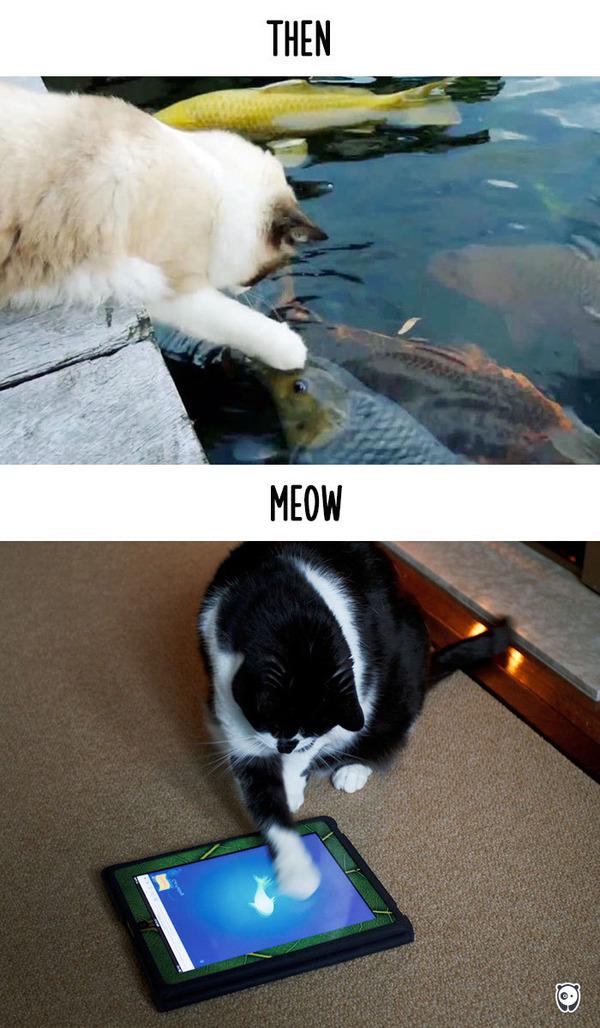 【猫画像】猫の生活を過去と現在で比較! (11)
