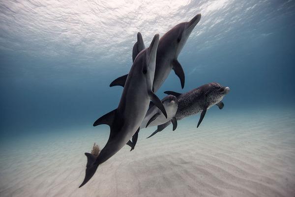 たくさんのイルカの海中写真 Jorge Cervera Hauser