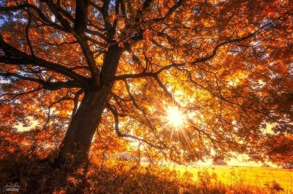 秋といえば紅葉や落葉の季節!美しすぎる秋の森の画像20枚 (6)