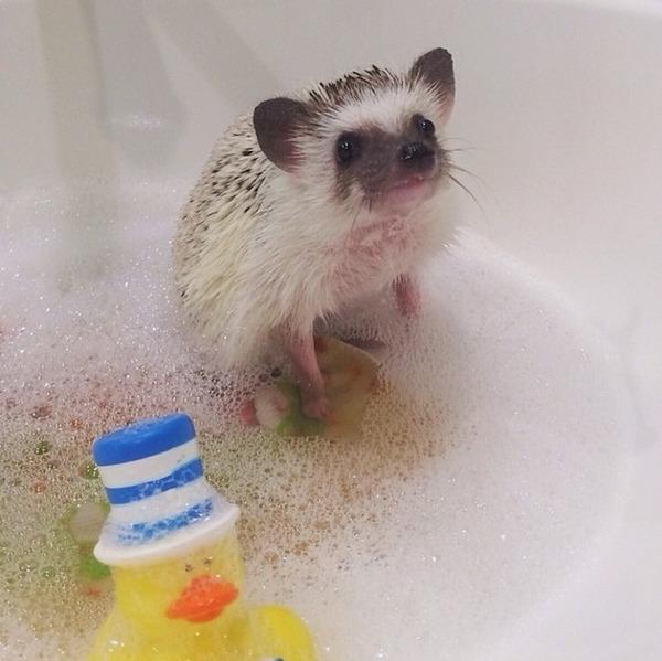 お風呂であわあわハリネズミ