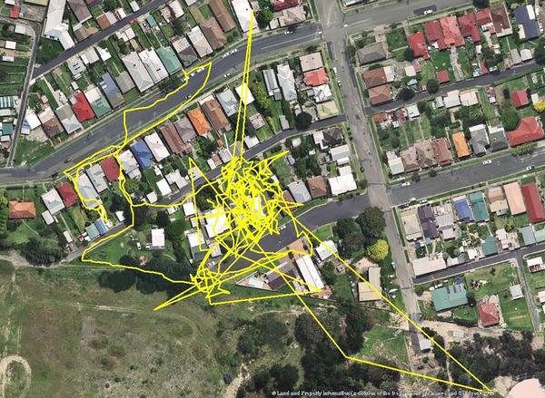 猫の行動範囲が思ったより広い!GPSで猫の行方を追跡 (7)