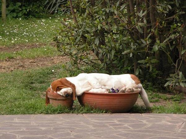 どこででも居眠りしちゃう子犬の可愛い画像 25