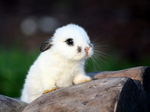 超ふわふわ!モフモフで愛らしいウサギの画像20枚 (14)