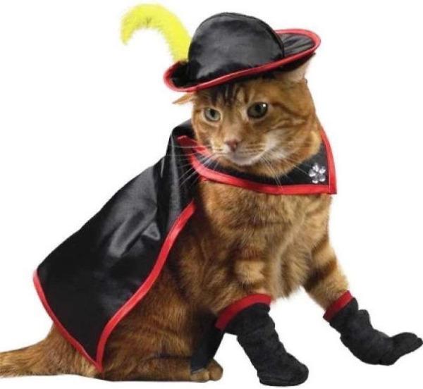 コスプレ猫!ハロウィンだし仮装した猫画像 (14)
