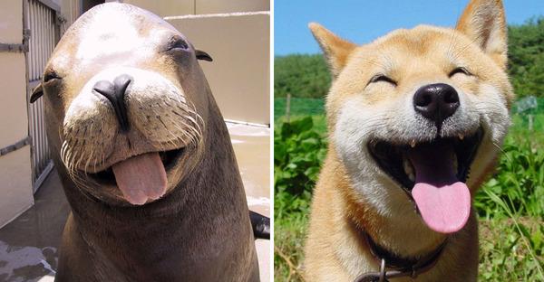 アザラシって犬そっくりじゃね?犬とアザラシを比較画像! (4)