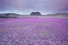 乾燥した荒野バッドランズに咲く美しい花々の風景写真11枚