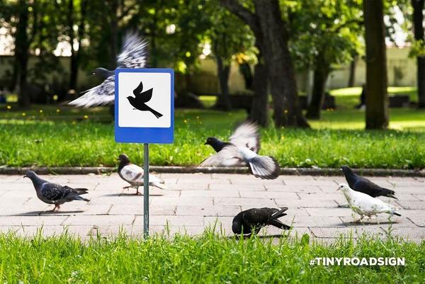 「鳥の空港」 / 鳩が集まる公園